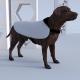 Dog Coat (Large) Brightwater custom printed